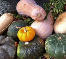 squash-fall-farmers-market