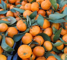 santa-monica-farmers-market-tour-amelia-saltsman-tangerines