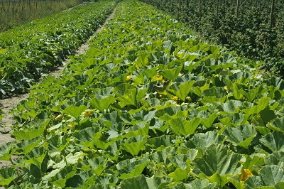 Rutiz Farm fields