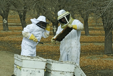 Bees at Fat Uncle Farms