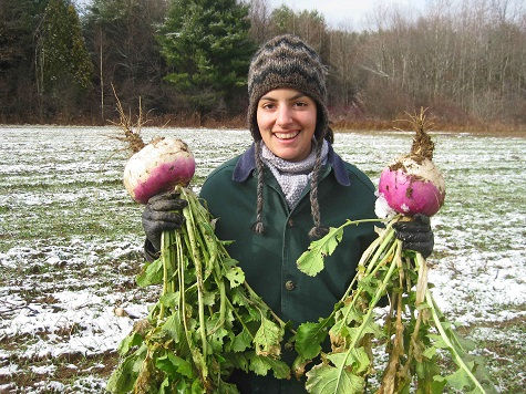 Turnips Siena Farms