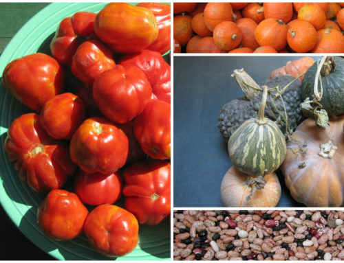 September & October: My Favorite Micro-Season